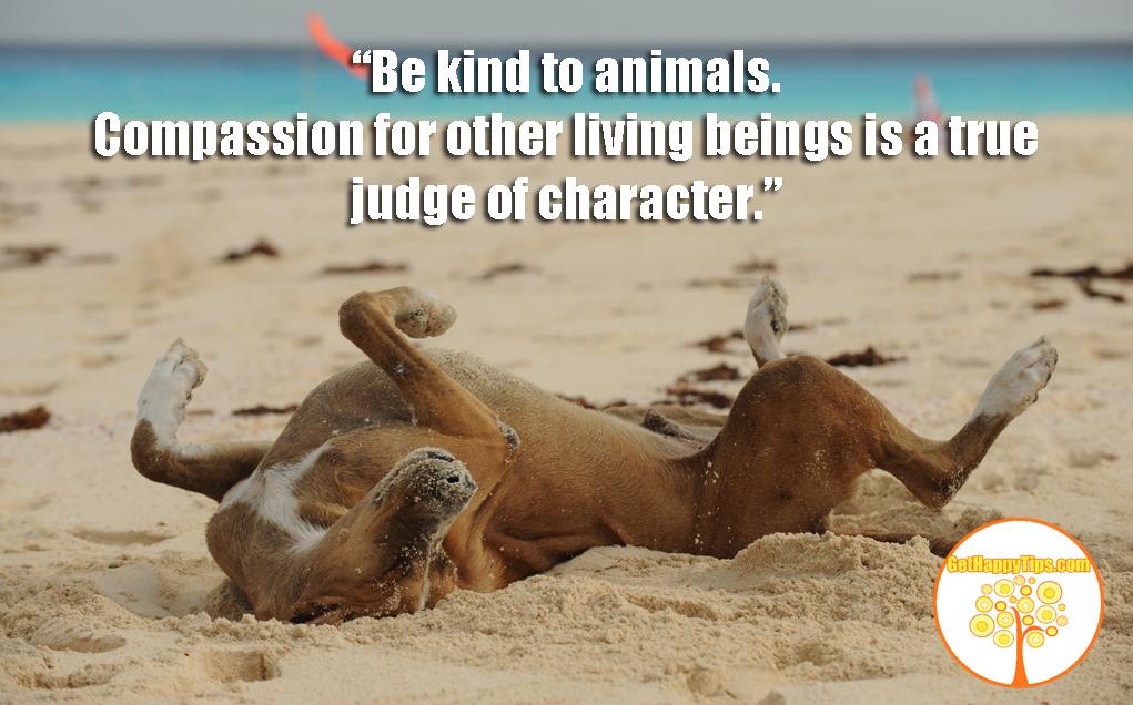 Get Happy Be Kind To Animals Get Happy Tips